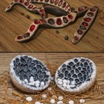 « Gousses » terre cuite émaillée, de 25 à 50 cm